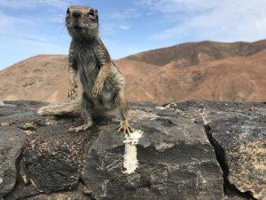 Hallo Streifenhörnchen (Foto: T. Pfannkuch)
