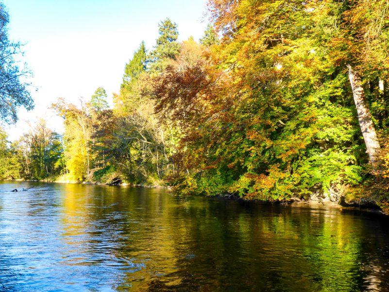 Herbststimmung entlang der Amper (Foto: Thomas Pfannkuch)