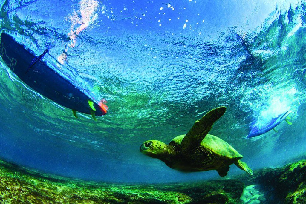 SUP und Umwelt (Quelle: Starboard)